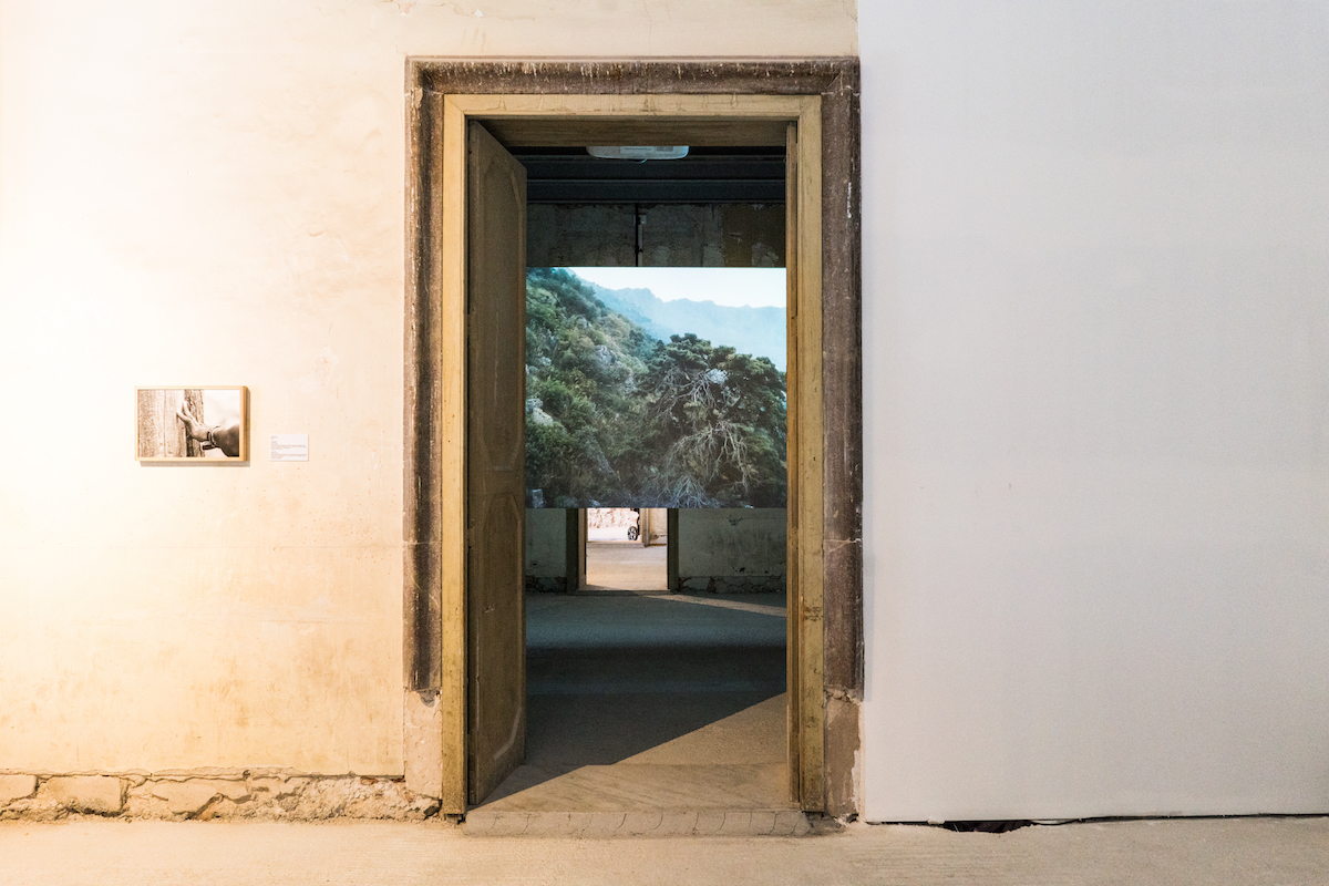 URIEL ORLOW, Wishing Trees, 2018, Video installation, documents and artefacts in vitrines, photography. Dimensions variable. Photo: Simone Sapienza, courtesy of Manifesta 12 Palermo and the artist.