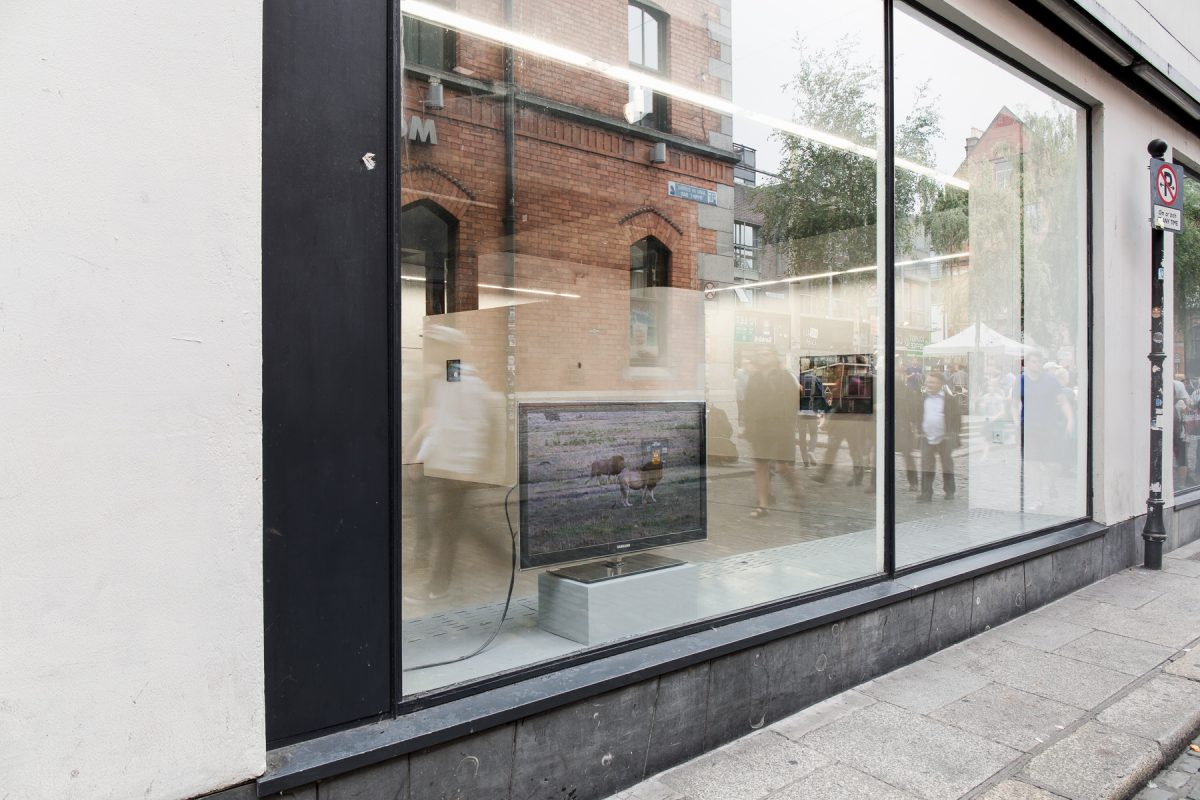 Stephen Loughman, Proven Answers, 2018, Installation view, Temple Bar Gallery + Studios. Photo: Kasia Kaminska